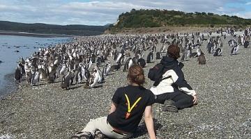Caminata con Pingüinos Isla Martillo