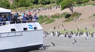 Navegación Pingüinera Isla Martillo